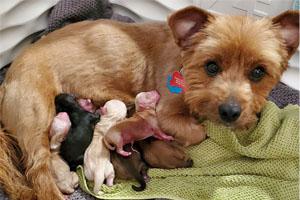 Mama Koko welcomes her babies on Mother's Day